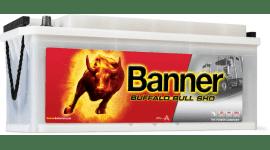 BANNER BUFFALO BULL SHD 1...